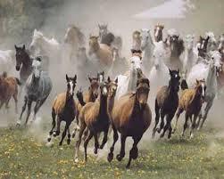 paard vlucht